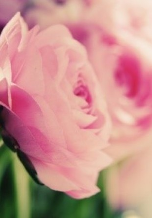 3 motive pentru care ar trebui să cumperi flori mai des